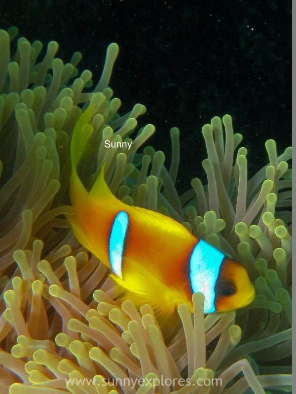 Sunnyexplores Nemo (7)kopie