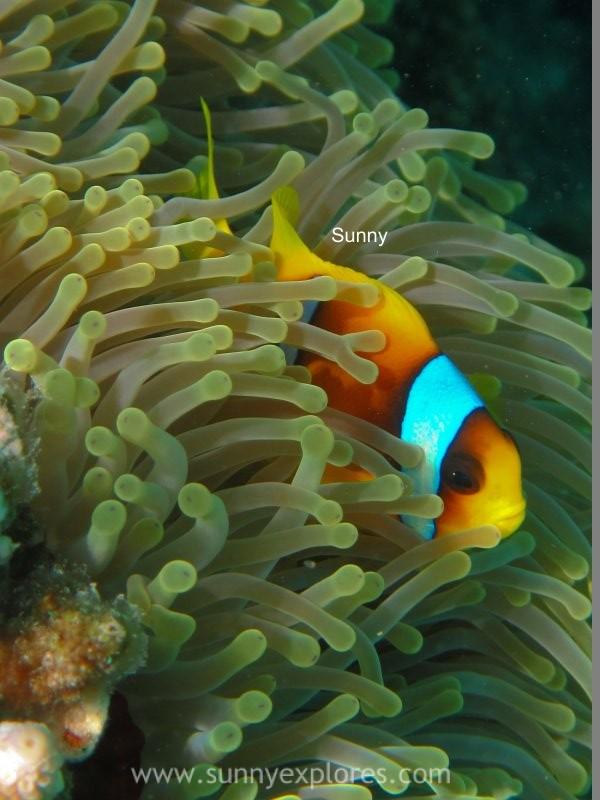 Sunnyexplores Nemo (8)kopie