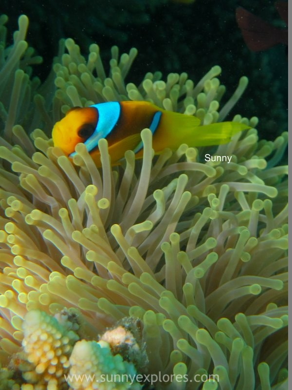 Sunnyexplores Nemo (9)kopie