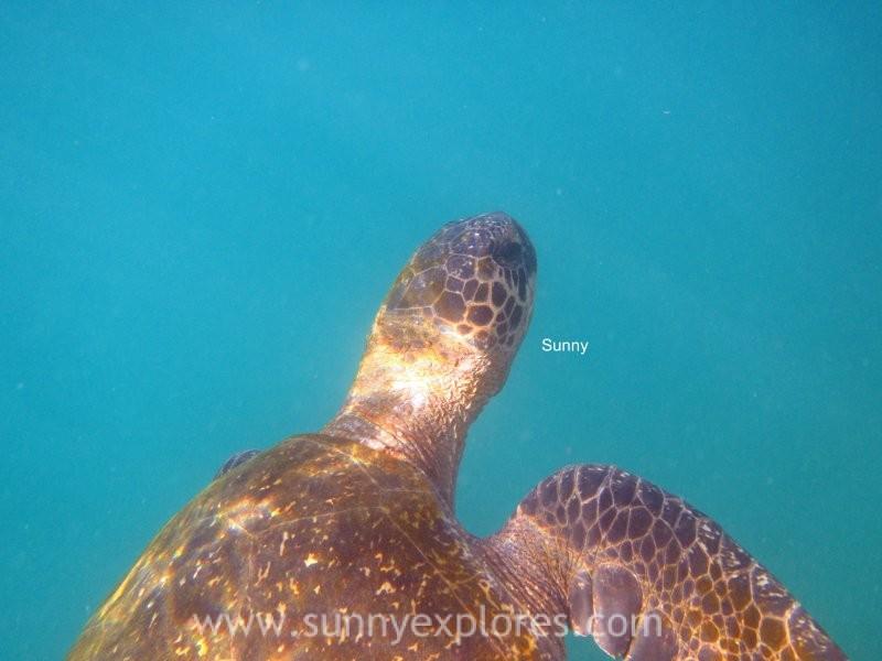 Snorkling Galapagos (10)kopie