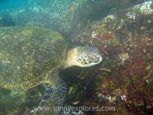 Snorkling Galapagos (11)kopie