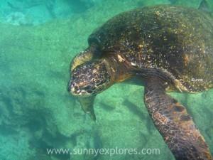 Snorkling Galapagos (12)kopie