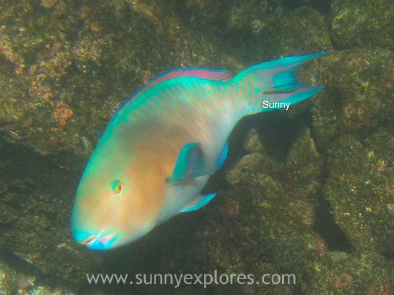 Snorkling Galapagos (19)kopie