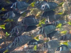 Snorkling Galapagos (20)kopie