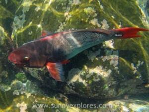 Snorkling Galapagos (21)kopie