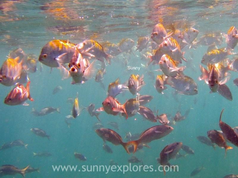 Snorkling Galapagos (2)kopie