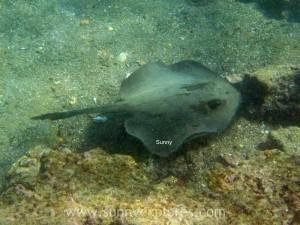 Snorkling Galapagos (3)kopie