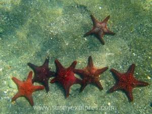 Snorkling Galapagos (4)kopie