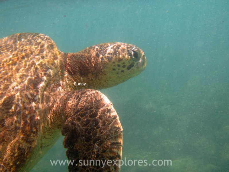 Snorkling Galapagos (6)kopie
