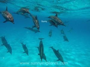Sunnyexplores Sataya 2016 (10)kopie