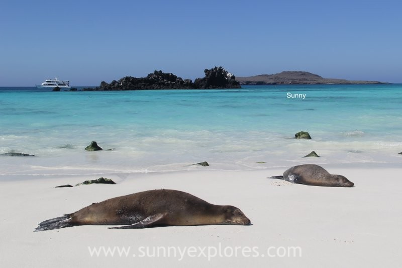 Sunnyexplores Galapagos 10 (1)kopie