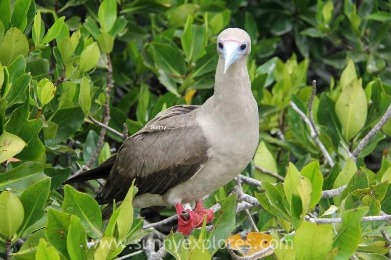 Sunnyexplores Galapagos 10 (2)kopie