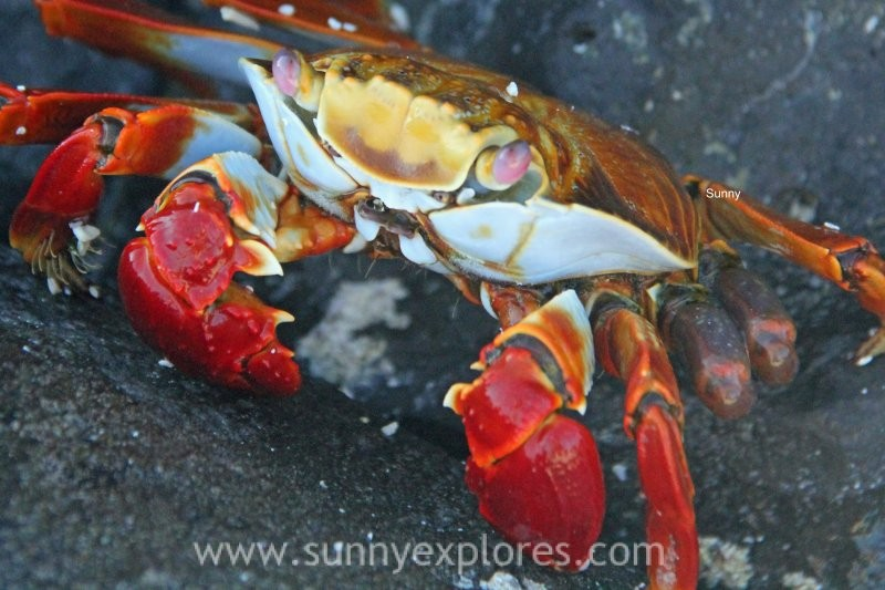 Sunnyexplores Galapagos 10 (7)kopie