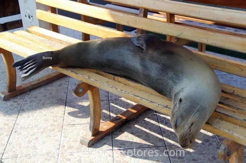 Sunnyexplores Galapagos 10 (9)kopie