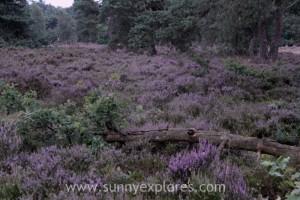 Sunnyexplores Veluwe 6