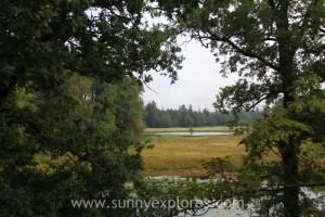 Sunnyexplores Veluwe 7
