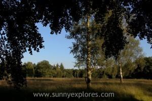 Sunnyexplores Veluwe 8