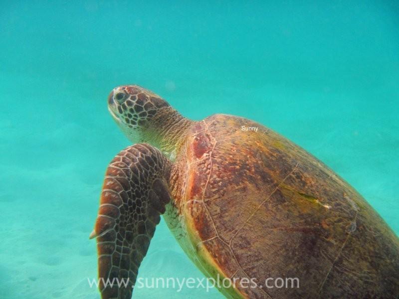Sunnyexplores turtle 10