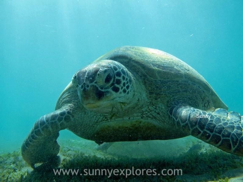 Sunnyexplores turtle 11