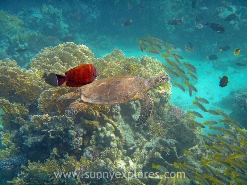 Sunnyexplores turtle 2