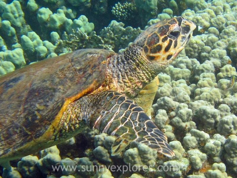Sunnyexplores turtle 3