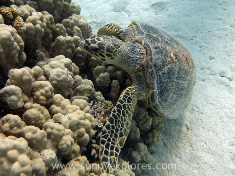 Sunnyexplores turtle 4