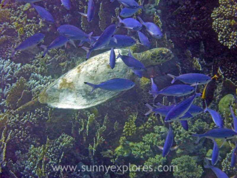 Sunnyexplores turtle 5