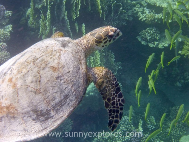 Sunnyexplores turtle 6