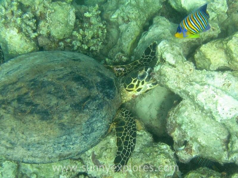 Sunnyexplores turtle 7