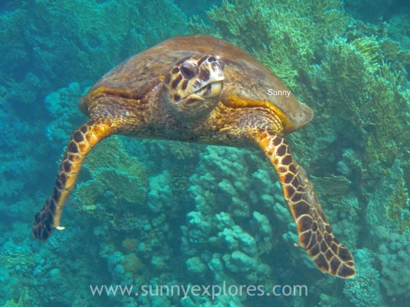 Sunnyexplores turtle 8