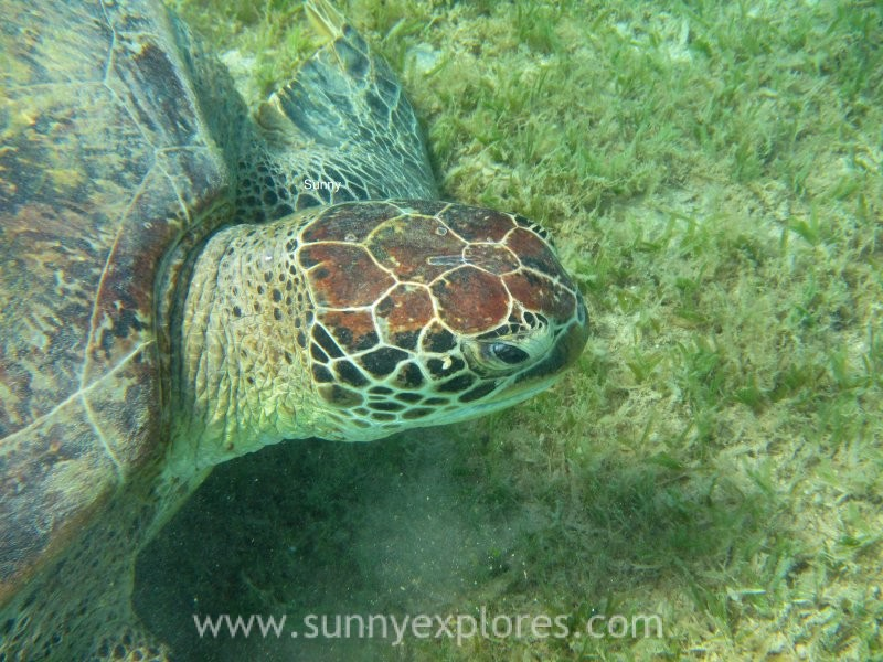 Sunnyexplores turtle 9