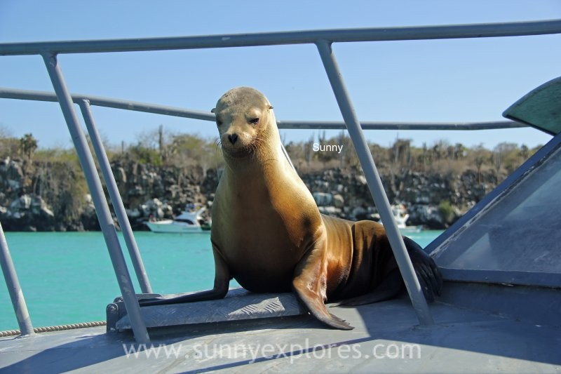 Sunny explores Galapagos 2016 (7)