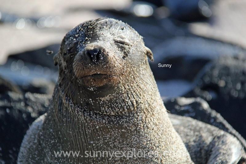 Sunny explores Galapagos 2016 (8)